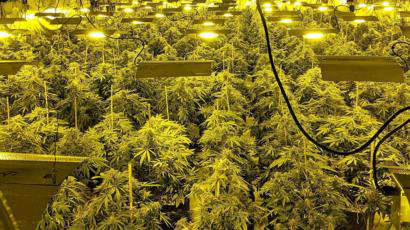 Debunking Colonial Attitudes on Cannabis for Africa's Economic Riches | The African Exponent.
