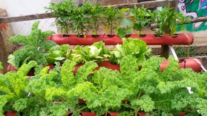 How Ukulima Tech Has Revolutionized Farming for Urban